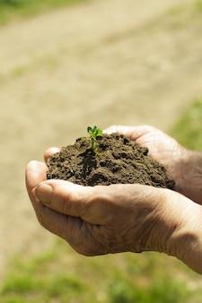 Ręce z ziemią i rośliną