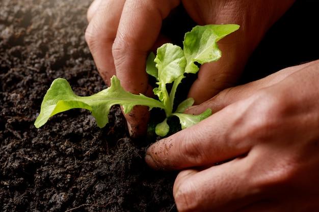 Ręczne sadzenie rolników kiełkować w żyznej glebie.