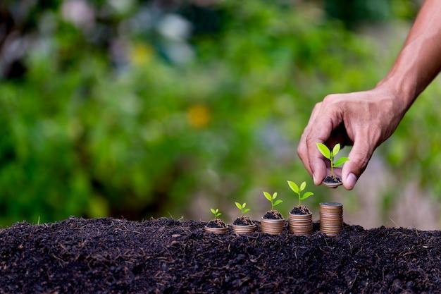 Ręczne wprowadzanie monet pieniężnych, takich jak rosnący wykres, rośliny wyrastające z ziemi