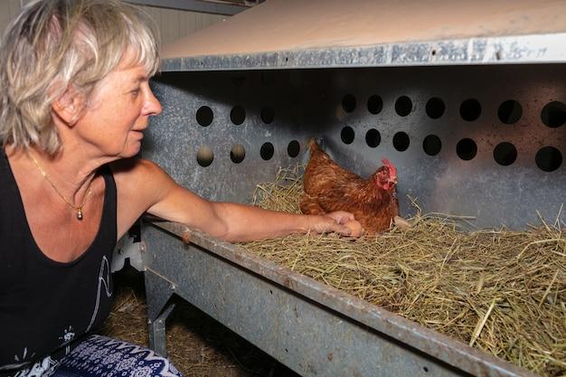 Ręczne zbieranie jaj na fermie kur niosek na wolnym wybiegu
