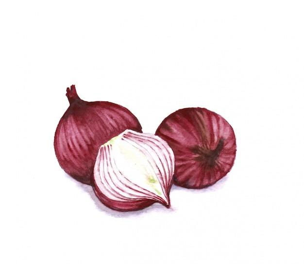Ręcznie rysowane akwarela ilustracja czerwona słodka cebula