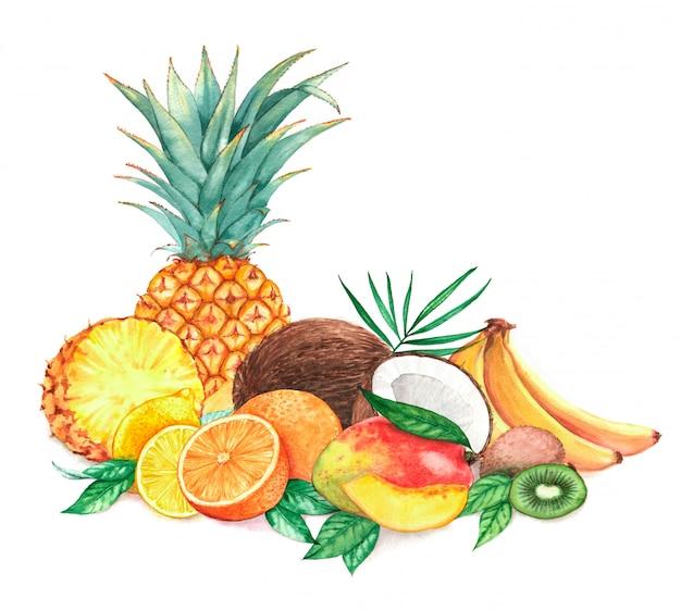 Ręcznie rysowane akwarela ilustracja różnych egzotycznych owoców tropikalnych