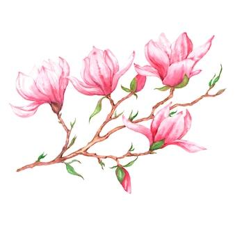 Ręcznie rysowane akwarela ilustracja różowa gałąź magnolii