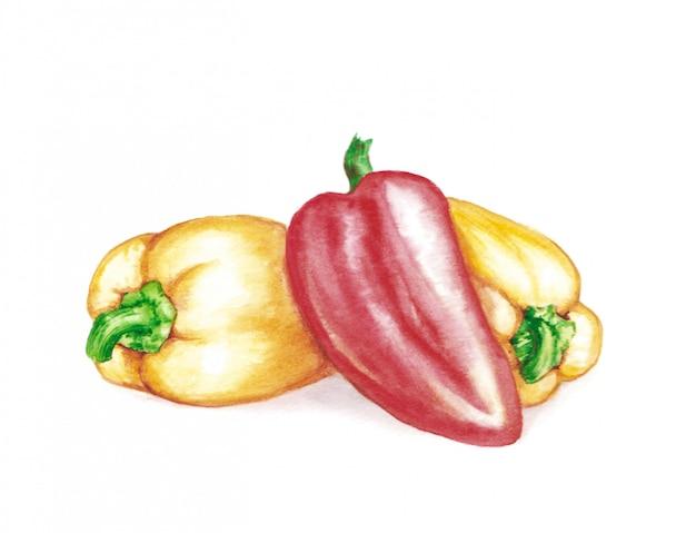 Ręcznie rysowane akwarela ilustracja świeże słodkie papryki - czerwony i żółty. wegetariański produkt spożywczy
