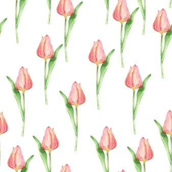 Ręcznie rysowane wzór tulipan akwarela kwiaty bezszwowa tekstura na białym tle na białym tle