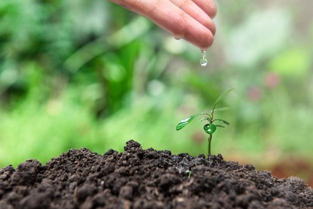 Ręcznie wartering małą roślinę