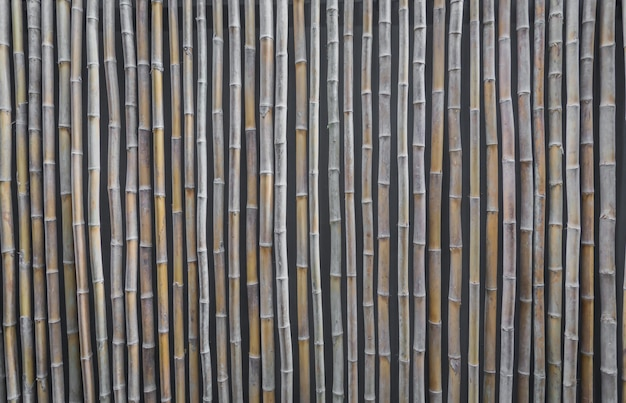 Reed ściana