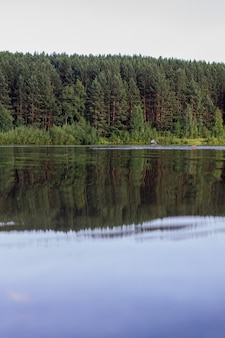 Refleksje na temat lasu iglastego nad jeziorem wilderness.