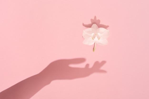 Ręka cień utrzymuje biały wiosenny kwiat. kobieta, dzień matki, koncepcja kobiecości i harmonii.