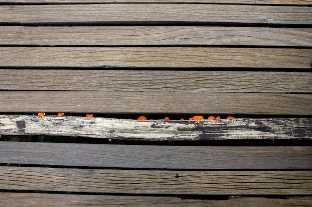 Ręka Ciosana Beli ściana Starzejący Się Drewniany Tło Wizerunek Premium Zdjęcia