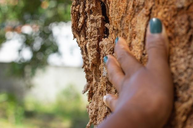 Ręka czarnej kobiety na pniu drzewa na tle pełnym roślin
