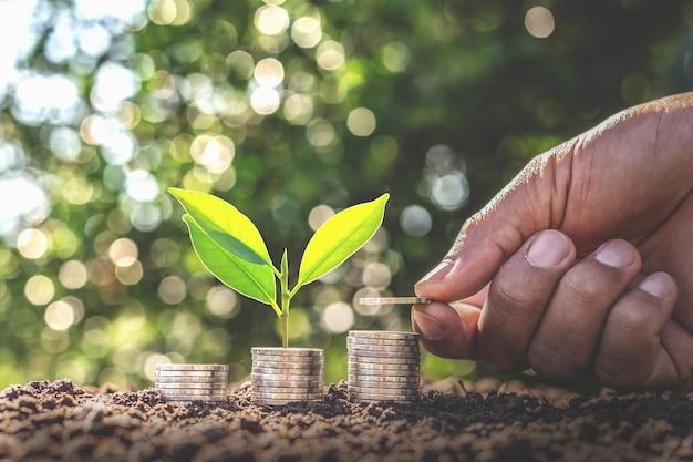 Ręka dająca monetę do drzewa rosnącego od stosu w monety pieniądze. rachunkowość finansowa, koncepcja inwestycji.