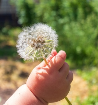 Ręka dziecka dająca kwiat