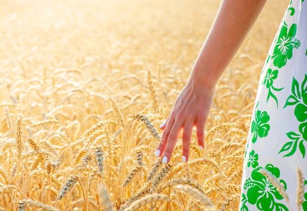 Ręka dziewczyny dotyka kłosów pszenicy wśród pola pszenicy, gorący letni dzień
