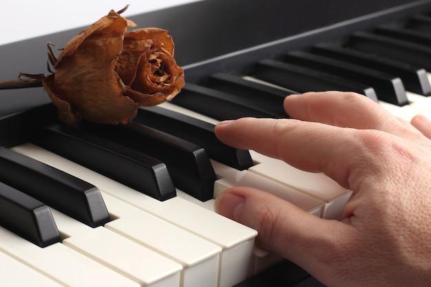 Ręka grająca na pianinie leżąca na nim z suszoną różą