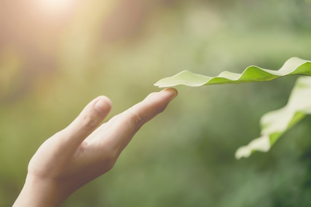 Ręka i liść, znak życzliwy środowisko pojęcie