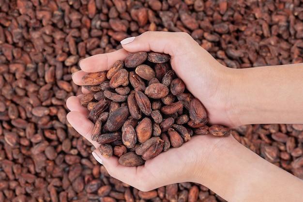 Ręka kobiety azjatki trzyma surowe ziarna kakao