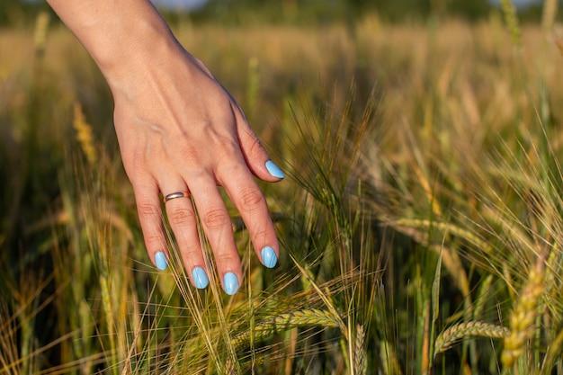 Ręka kobiety dotyka młodych kłosów pszenicy o zachodzie słońca lub wschodzie słońca.