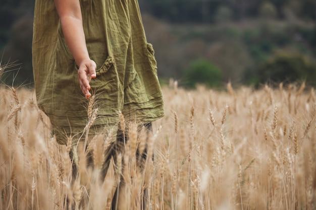 Ręka kobiety dotykając kłosy pszenicy z czułością w polu jęczmienia