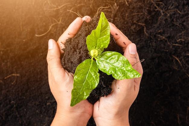 Ręka kobiety trzymającej kompost żyznej czarnej ziemi