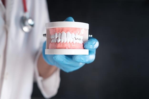 Ręka lekarza trzyma plastikowy model zębów dentystycznych