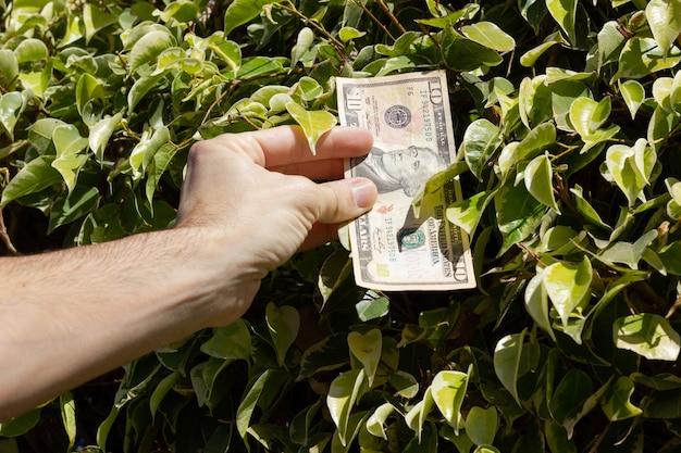 Ręka mężczyzny biorąca banknot dziesięciodolarowy z krzaka zielonych liści pieniądze rosnące na drzewach szczęśliwe koncepcje