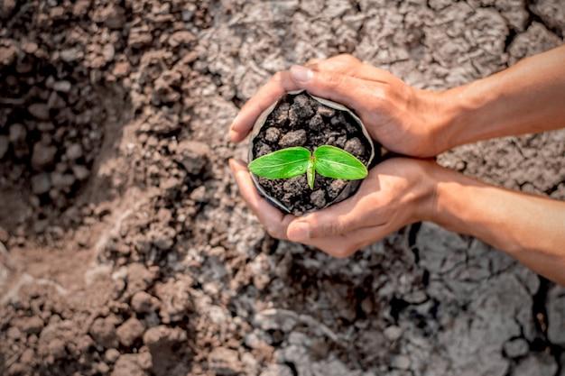 Ręka mężczyzny sadzi sadzonki w glebie.