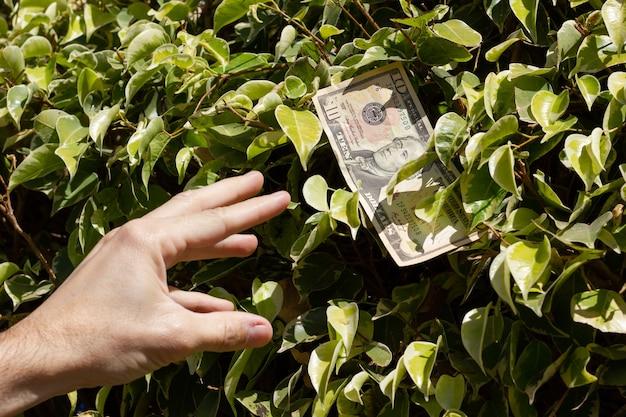 Ręka mężczyzny sięgająca dziesięciodolarowego banknotu z zielonych liści krzewu w słoneczny dzień pieniądze rosnące na drzewie