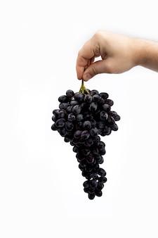 Ręka mężczyzny trzyma gałąź czarnych winogron z kroplami wody pionowo na białym tle