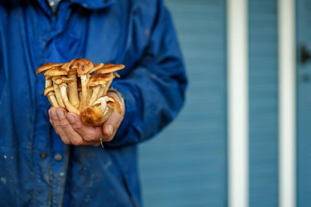 Ręka mężczyzny w niebieskiej kurtce trzyma w rękach grzyby miodowe. reklama jesiennych blanków.