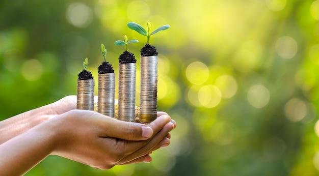 Ręka moneta drzewo drzewo rośnie na stosie. oszczędzanie pieniędzy na przyszłość. pomysły inwestycyjne i rozwój biznesu