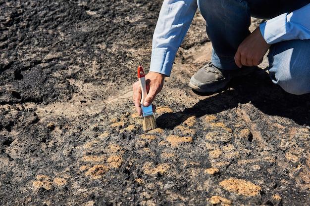 Ręka paleontologa wydobywa skamieniałości ze skały, czyszcząc ją szczotką