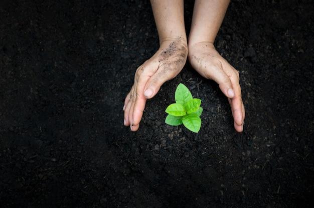 Ręka podlewanie roślin drzewo górska zieleń