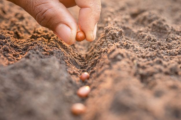 Ręka rolnika sadzenia brązowe nasiona w glebie. koncepcja wzrostu i środowiska