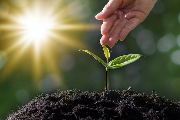 Ręka rolników są podlewania sadzonek na czarnym tle