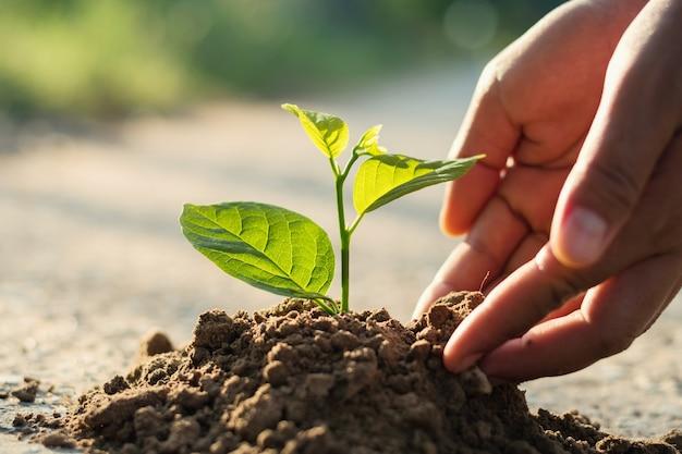 Ręka sadzenia kiełki w glebie z zachodem słońca