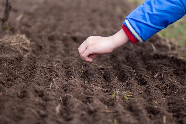 Ręka sadzenia nasion marchwi szpiku w ogrodzie warzywnym. czas na ogrodnictwo jak ocalić pojęcie pokoju