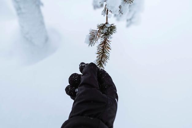 Ręka sięgająca do ośnieżonego drzewa w parku narodowym riisitunturi, finlandia