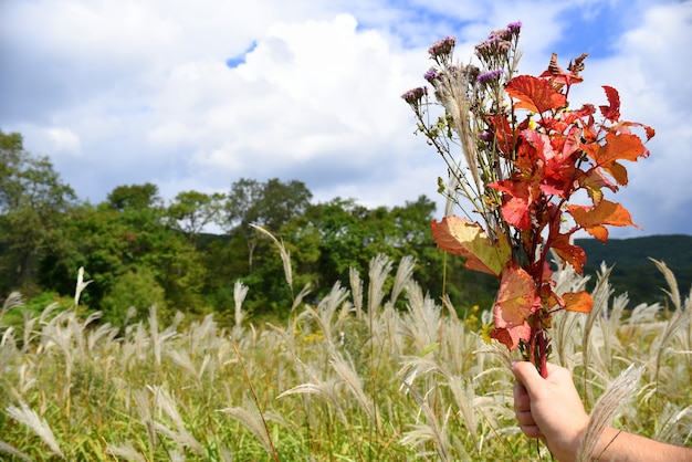 Ręka trzyma bukiet jesiennych kwiatów i gałęzi z czerwonymi liśćmi