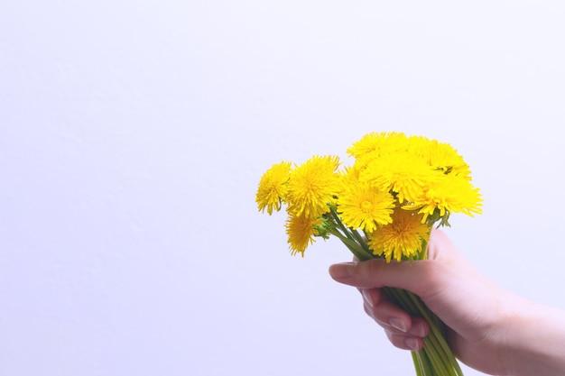 Ręka trzyma bukiet żółte kwiaty mniszek w ręku na jasnym tle, miejsce. jasne wiosenne kwiaty.