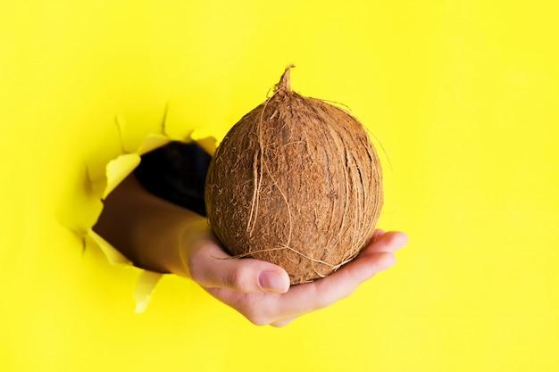Ręka trzyma duży cały kokos przez otwór w poszarpanej żółtej ścianie papieru. oferta specjalna i żywność ekologiczna