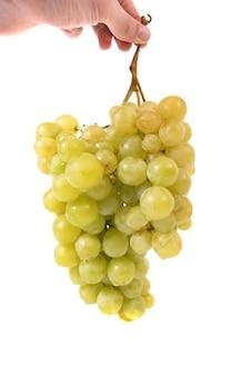 Ręka trzyma kiść winogron na białym tle