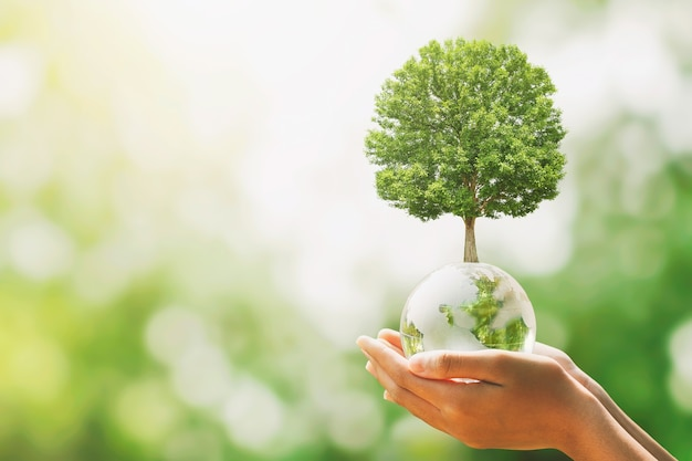 Ręka trzyma kulę szklaną kulę z drzewa rośnie i zielony natura rozmycie tła. koncepcja eko