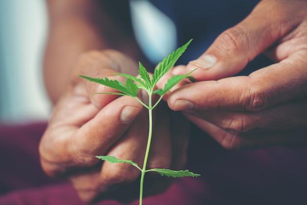 Ręka trzyma liść marihuany