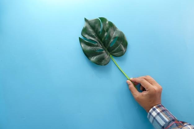Ręka trzyma liść palmowy na niebieskim tle