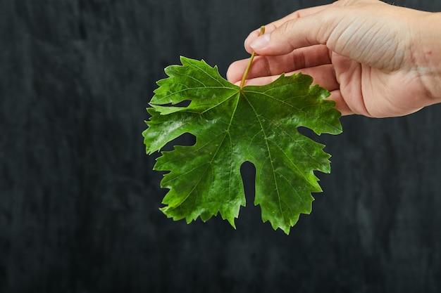 Ręka trzyma liść winogron na ciemnym tle. wysokiej jakości zdjęcie