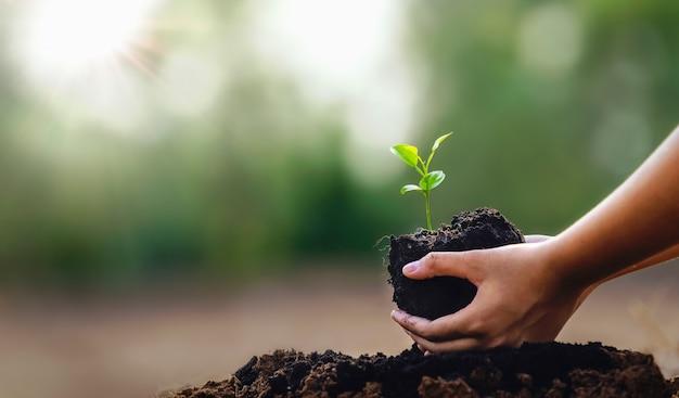 Ręka trzyma małą roślinę do sadzenia w ogrodzie