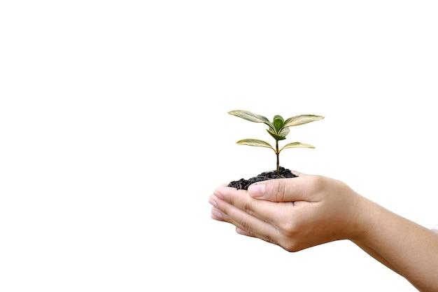 Ręka trzyma małe drzewo na białym tle koncepcja dzień ziemi ekologicznej eco