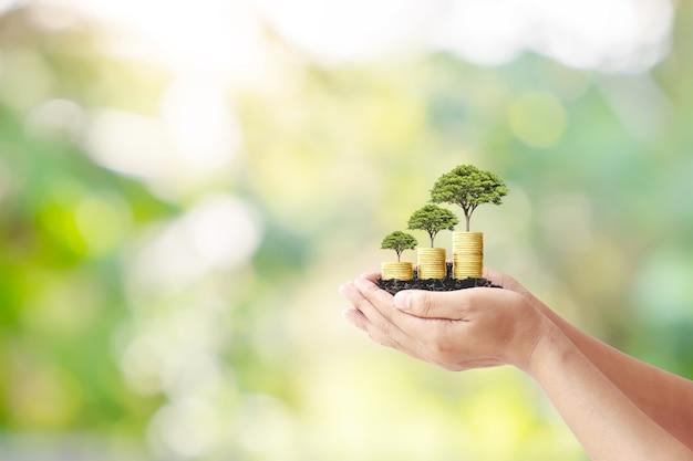 Ręka trzyma małe drzewo wyrastające z monet na zielonym tle przyrody rozmycie koncepcji finansowej