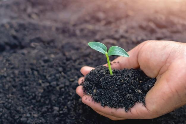 Ręka trzyma małego drzewa dla zasadzać w ogródzie